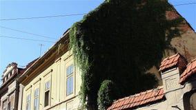Klimop op Oude Huismuren stock video