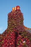 Klimop op schoorsteen Stock Afbeelding
