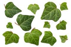 Klimopbladeren die op een witte achtergrond worden geïsoleerd Hoogste mening stock foto
