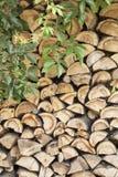 Klimplant Stock Afbeeldingen