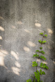 Klimplant op de muur Stock Fotografie