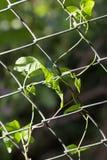Klimplant op de omheining aan aard stock fotografie