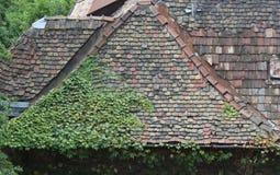 Klimplant op een dak royalty-vrije stock afbeelding