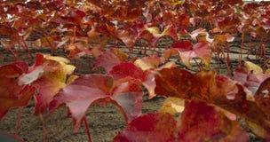 Klimplant op Muur Royalty-vrije Stock Afbeelding