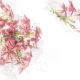 Klimplant van Rangoon van de bloesem de roze bloem Stock Fotografie