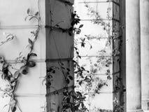 Klimplanten Royalty-vrije Stock Foto's