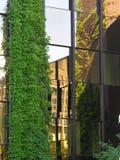 Klimplanten Royalty-vrije Stock Afbeeldingen