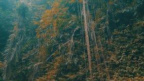 Klimplanten en tropische installaties in de regenwoudwildernis stock video