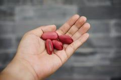 Klinge Bean Seed stockbilder
