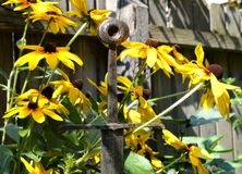 Klinge unter Blumen Stockbild