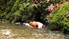 Klingerytów inny i butelki bałaganią obracać dalej poziom wody Kręcenie brudna okropna odór woda zbiory wideo