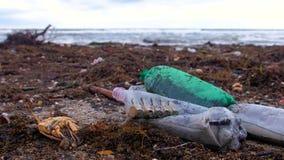 Klingeryt butelki, umierali kraby, zwierzę resztki i innych gruzy wśród gałęzatki na piaskowatym seashore, po burzy zdjęcie wideo