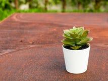 Klingeryt rośliny na brązu tle obraz royalty free