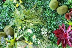 Klingerytu ogród Zdjęcie Royalty Free