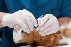 kliniki veterinary Fotografia Royalty Free