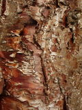 Klinki pine bark Royalty Free Stock Photos