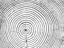 Klipp årliga cirklar vektor illustrationer