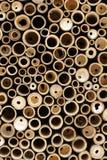 Klipp bambu Royaltyfria Foton