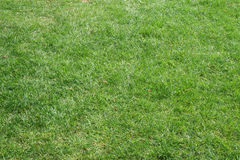 klipp beautifully fältgräs Royaltyfri Fotografi