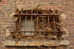 Klipp den hängande växten bak fängelsestänger Arkivbilder