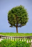 klipp den runda treen Arkivfoto