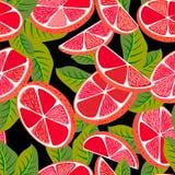 Klipp den sömlösa modellen för grapefrukten Royaltyfri Fotografi
