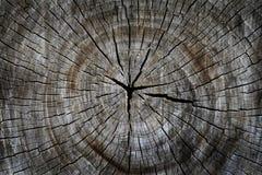 klipp den torkade gammala treen Arkivfoton