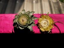 Klipp det Head/slutet för ananas på det ljusa rosa plast- Mat/arket i royaltyfri fotografi