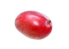 klipp för half vitt helt mangostycke för frukt Royaltyfri Fotografi