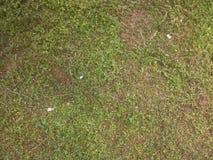 klipp gräs royaltyfri bild