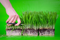 klipp gräs Royaltyfri Foto