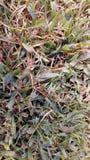 Klipp gräs från bakgården Arkivbild