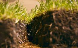 klipp grön lawn för gräs arkivfoto