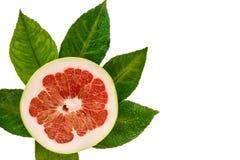 Klipp grapefrukten, ny grön lövverk isolerad övre sikt Royaltyfri Fotografi