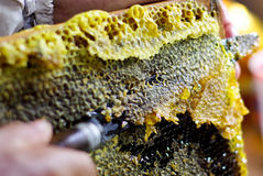 klipp honungskakor Arkivbild
