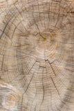 Klipp igenom trädavsnittet med cirklar och knäcker ståenden royaltyfria foton