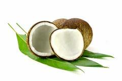 Klipp kokosnötskalet med den nya organiska kokosnötkärnan Arkivfoto