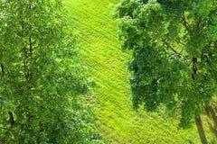 klipp lawn arkivbilder