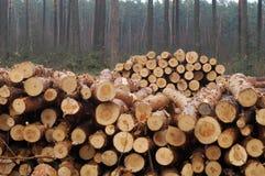 klipp ner trees arkivfoto