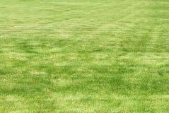 klipp ny lawn fotografering för bildbyråer