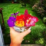 klipp nya blommor fotografering för bildbyråer