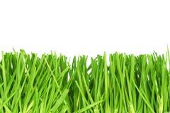 klipp nytt gräs Arkivbild