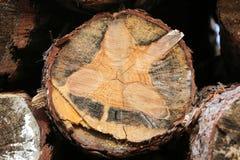 Klipp nytt sörjer trädet loggar in skogen utomhus Arkivbilder