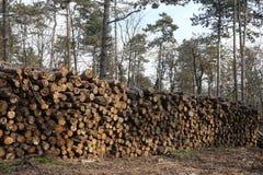 Klipp nytt sörjer trädet loggar in skogen utomhus Royaltyfri Foto