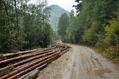Klipp nytt treestammar nära en skogväg Royaltyfria Foton