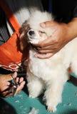 Klipp päls för hunden Royaltyfria Bilder