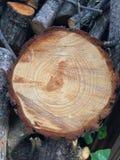 Klipp slutet av den wood trädjournalskivan Royaltyfri Foto