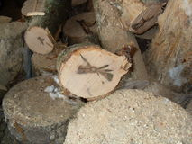 klipp trä Arkivbild