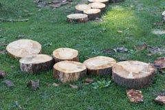 Klipp trä i skogarna Arkivfoto