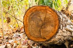 Klipp trä i skogen Royaltyfria Bilder